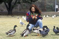 Woman feeding Mallard ducks, Central Coast, CA Stock Photos