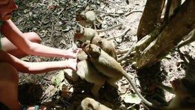 Woman feeding monkeys stock video footage