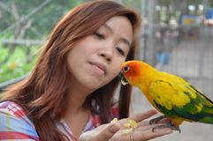 Woman feeding parrots on her hand Royalty Free Stock Image