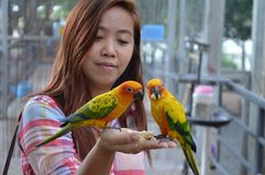 Woman feeding parrots on her hand Royalty Free Stock Images