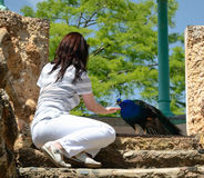 A woman feeding the peacock in the Park Sama Stock Images