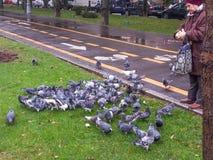 Woman feeding pigeons Royalty Free Stock Image