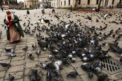 Woman feeding pingeons royalty free stock photography