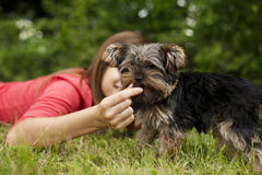 Woman feeding puppy Stock Images