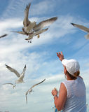 Woman feeding seagulls Stock Images
