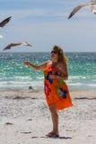 Woman feeding seagulls Stock Photography