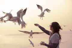 A woman feeding seagulls by her hands. stock image
