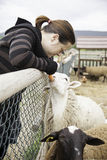 Woman feeding sheep Stock Photo