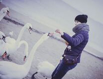 Woman feeding swans Royalty Free Stock Image