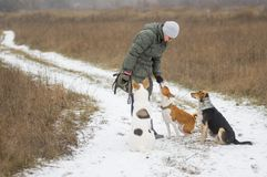 Woman feeding up her three dogs. Mature woman feeding up her three dogs playing outdoor at winter season Stock Photography