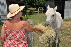 Woman Feeding a White Horse. A middle-aged woman feeds hay to a white horse Royalty Free Stock Photos