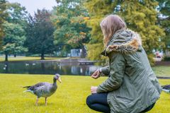 Woman feeds a duck in a park stock photo