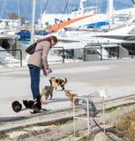 A woman feeds the homeless cats in marina Mandraki in Rhodes royalty free stock photos