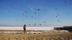 Woman Feeds the Hungry Seagulls Flying over the Frozen Ice-Covered Sea stock video