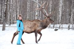 Woman feeds Maral A large Siberian deer with big horns in winter. On a farm royalty free stock image