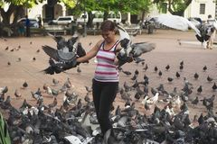Woman feeds pigeons in Santo Domingo, Dominican Republic. Stock Images
