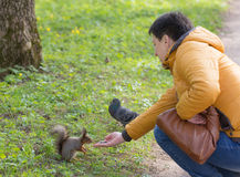 Woman feeds a squirrel Royalty Free Stock Image