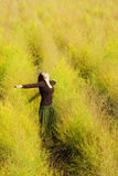 Woman feeling freedom in a field. Royalty Free Stock Photography