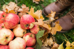 Woman feet in boots with apples and autumn leaves royalty free stock photography