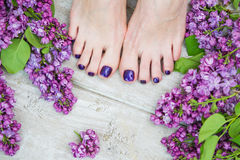 Woman feet with dark purple pedicure and lilac. Woman feet with dark purple pedicure and beautiful fresh lilac flowers, beauty treatment royalty free stock photo