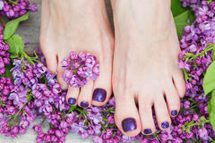 Woman feet with dark purple pedicure and lilac. Woman feet with dark purple pedicure and beautiful fresh lilac flowers, beauty treatment royalty free stock image