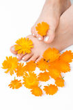 Woman feet and flower Stock Photography