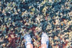 Woman feet on grass top view digital illustration. Walk on summer lawn. Sunny day outdoor faded poster. Stock Photos