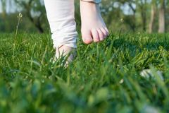 Woman feet on the green grass in morning stock photos
