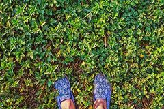 Woman feet on green grass top view digital illustration. Summer lawn walk. Sunny day outdoor poster. Stock Photography