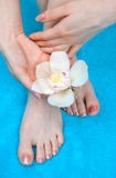 Woman feet and hands royalty free stock image