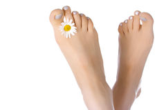 Woman feet with ox-eye Stock Photos