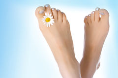 Woman feet with ox-eye Royalty Free Stock Photography