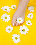 Woman feet after pedicure Stock Photography