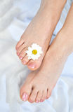 Woman feet after pedicure Royalty Free Stock Photo