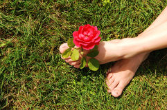 Woman feet with rose. Stock Photography