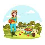 Woman or female gardener holding apples, pears. Woman agrarian gathering garden apples or picking pears. Female farmer or gardener standing near wheelbarrow with Royalty Free Stock Photo