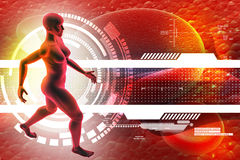 Woman female human body Stock Images