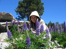 Woman in field. A beautiful woman wearing a hood sitting in beautiful lavender flowers in a garden Stock Images