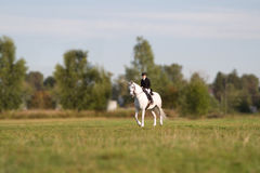 Woman in field galloping on a white horse Stock Images
