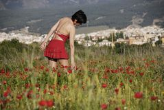 Woman in field of poppies. A girl dressed in red in a field of poppies Stock Photos
