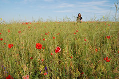 Woman in a field of poppies Stock Images