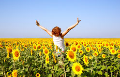 Woman in  field with sunflowers Stock Image