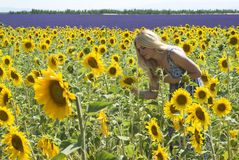 Woman in field sunflowers Royalty Free Stock Image