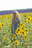 Woman in field sunflowers Royalty Free Stock Photo