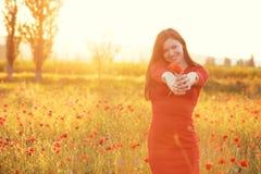 Woman in field in sunlight Stock Photos