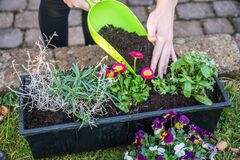 Free Woman Filling Potting Soil Into A Flower Box After Planting The Flowers Stock Image - 213568911