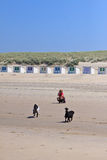 Woman filming her dogs on the beach Royalty Free Stock Images