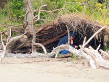 Woman finds natural shelter. An uplifted tree creates a natural shelter for a woman royalty free stock photography