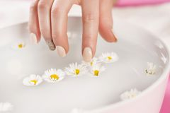Woman finger with manicure on nails touch daisy flower. In bow with water. Manicure and hand beauty concept. Selective focus Royalty Free Stock Images