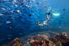 Woman and fish. Young woman diving on a breath hold and finning near huge school of Jack fish Royalty Free Stock Photo